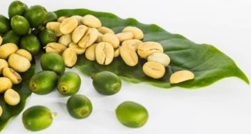 Combination of Green Coffee Bean Extract And Garcinia Cambogia