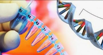 MTHFR Gene Mutation – Top Symptoms and How to Test for It